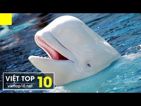 Top 10 Loài Động Vật Có Màu Sắc Kỳ Lạ, Độc Đáo Nhất Hành Tinh