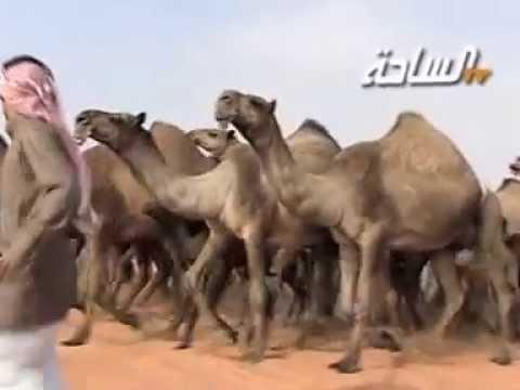 مسيرة منقية / ناصر بن علي بن ملهم الشامري