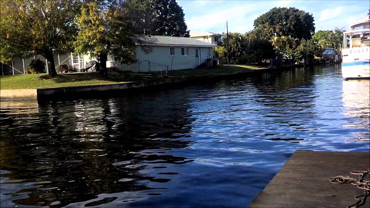 Dolphins in cape coral fl canal paddle boarding with for Florida canal fishing