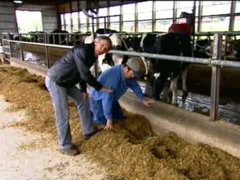 Bovinocultura de leite - Sistema Automatizado e Bem estar