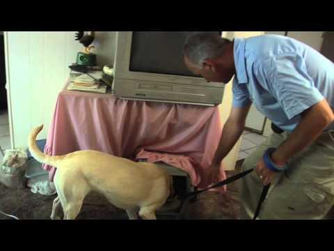 Pest Conrol Bed Bugs Treatment 3 | Las Vegas Nevada | 702-636-8571