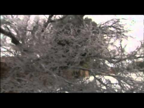 VTC14_Nhiều bang tại Mỹ chìm trong bão tuyết