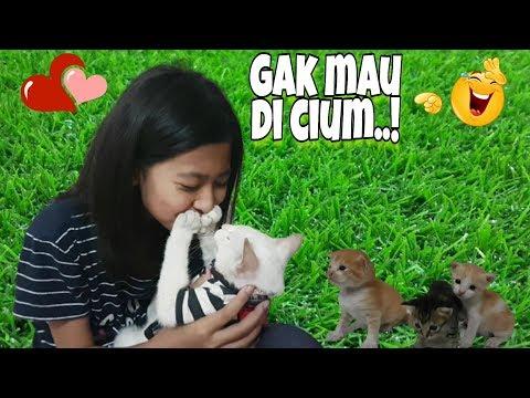 Kucing Lucu Miss Cemplon Gak Mau Di C1um, Haha 😁 Kocak Abis ❤️ Shafeea Hanum ♥️ Miss Cemplon