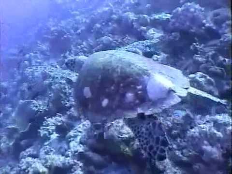 Maldive immersioni ( dive ) 1a parte