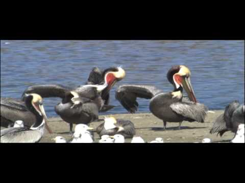 Birds Vertebrates
