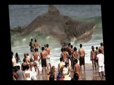DEAD MEGALODON WASHED UP ON BEACH