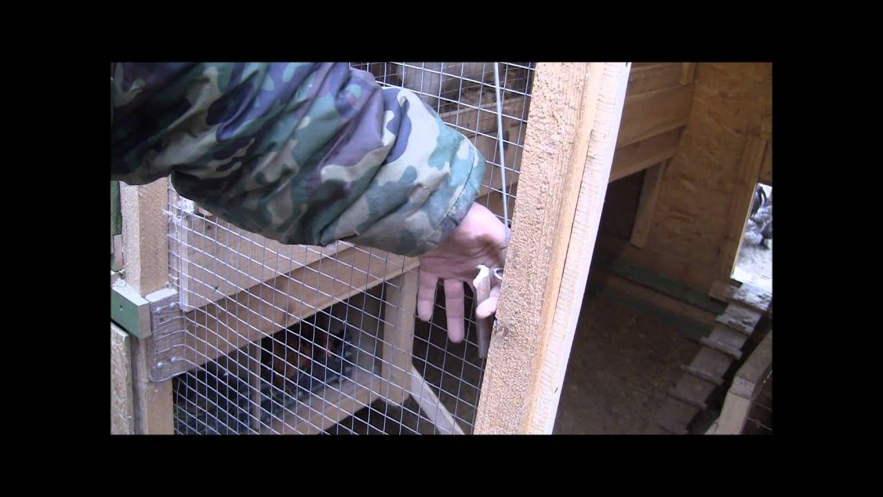 Приколы в сельском хозяйстве как узнать где гнездо курицы по.