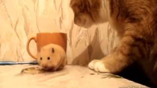 食事中のハムスターとねこ