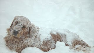 Rescuers Spot Dog In Freezing Cold, Then See He's Keeping Someone Else Warm