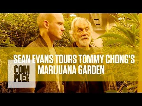 Tommy Chong's Shows His Medical Marijuanna Garden
