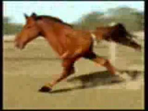 two legged horse running gif