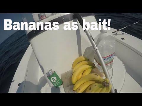Banana Baits