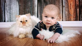 Cute Cats and Dogs Love Babies Compilation (2017)