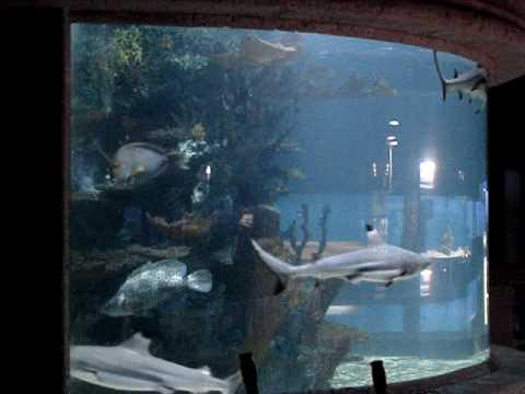 Monster 5000 gallon shark tank fish aquarium episode 1 youtube