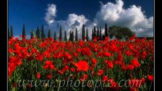 (THE MISSION) A ROSE AMONG THORNS-DULCE PONTES-ENNIO MORRICONE