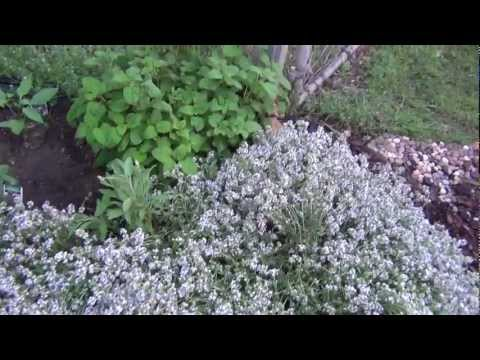 Herb Garden Tour