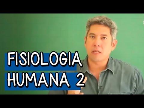 Resumo para o ENEM - Biologia - Fisiologia Humana 2: Sistema Nervoso