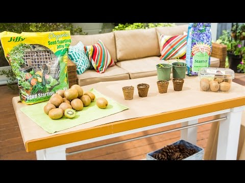 Hallmark Channel Home & Family 2122 - Shirley Bovshow Planting Kiwis