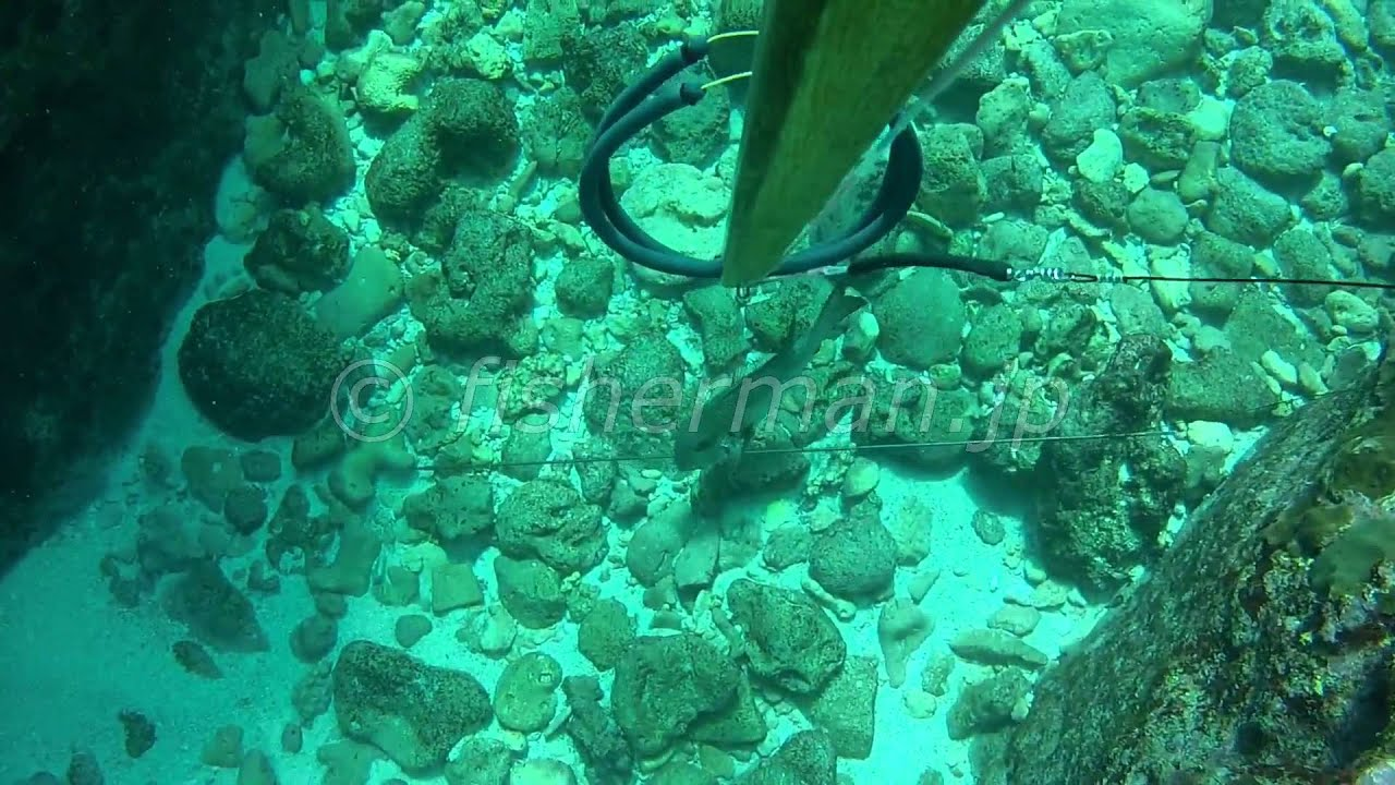 The Commercial Spearfishing in Okinawa 2013, Part 1/2 #1