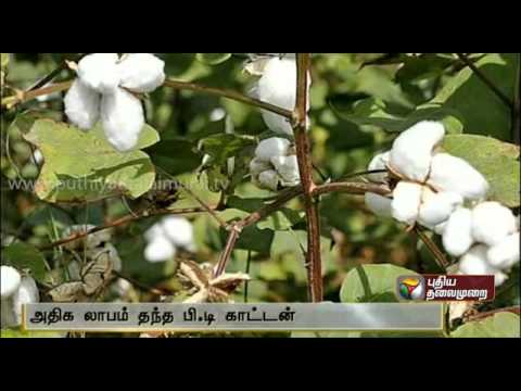 High profit in BT Cotton