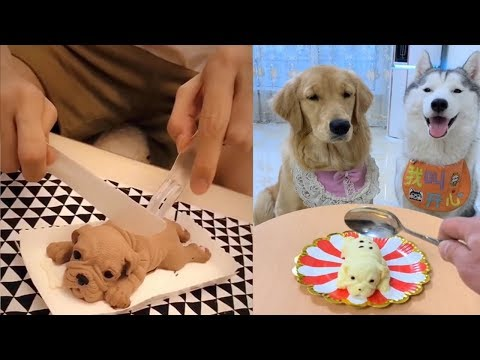Dog Reaction to Cutting Cake - Funny Dog Cake Reaction Compilation