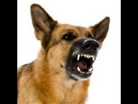 Dog Growling Sound Effect Free Download