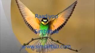 Radio Simbirtuu: Oduu fi Waa'ee Oromoota Biyya Saudi Arabia