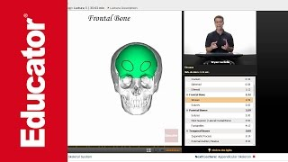 """Axial Skeleton"" 