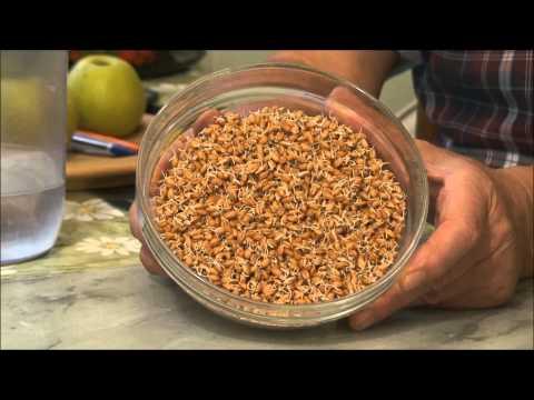 Как употреблять пшеницу в домашних условиях