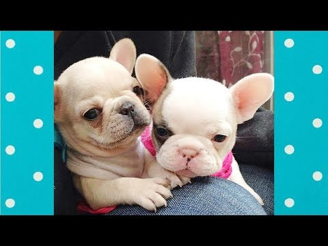 CUTE Puppies Always Make You Smile #2 ♥ Cute Dogs