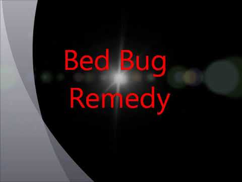 Bed Bugs Remedy Youtube