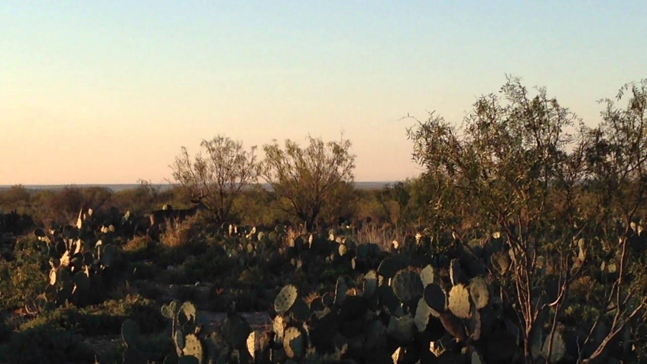 Deer Rut 2013 East Texas