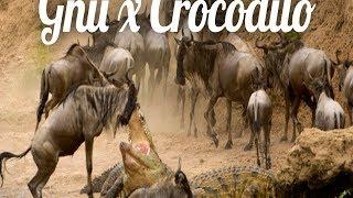Planeta Animal: Gnu Luta Para Escapar De Ataque De