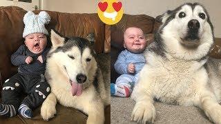 Bebé con su Husky