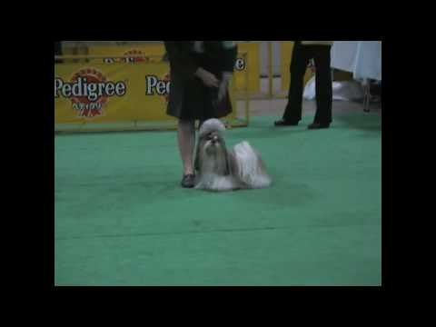2008 12 20 CHANPION OF CHANPION SHIH TZU  JAPAN DOG FESTIVAL