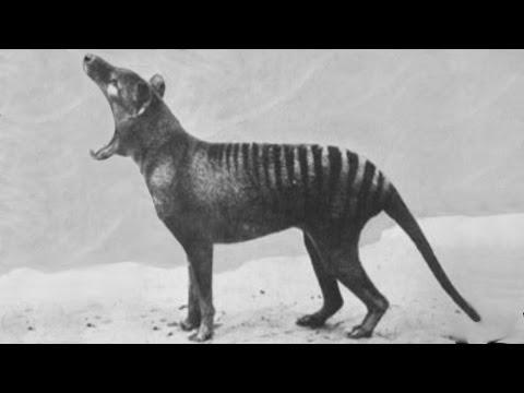 Vyhynuté zvieratá zachytené kamerou