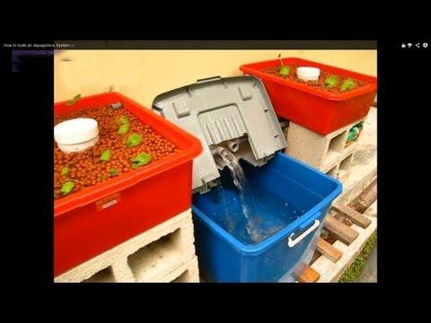 How to build an Aquaponics System on a low budget