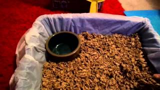 Tips & Tricks!: How To Litter Box Train Your Rabbit