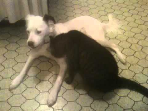 Kitty and Puppy Interspecies Love