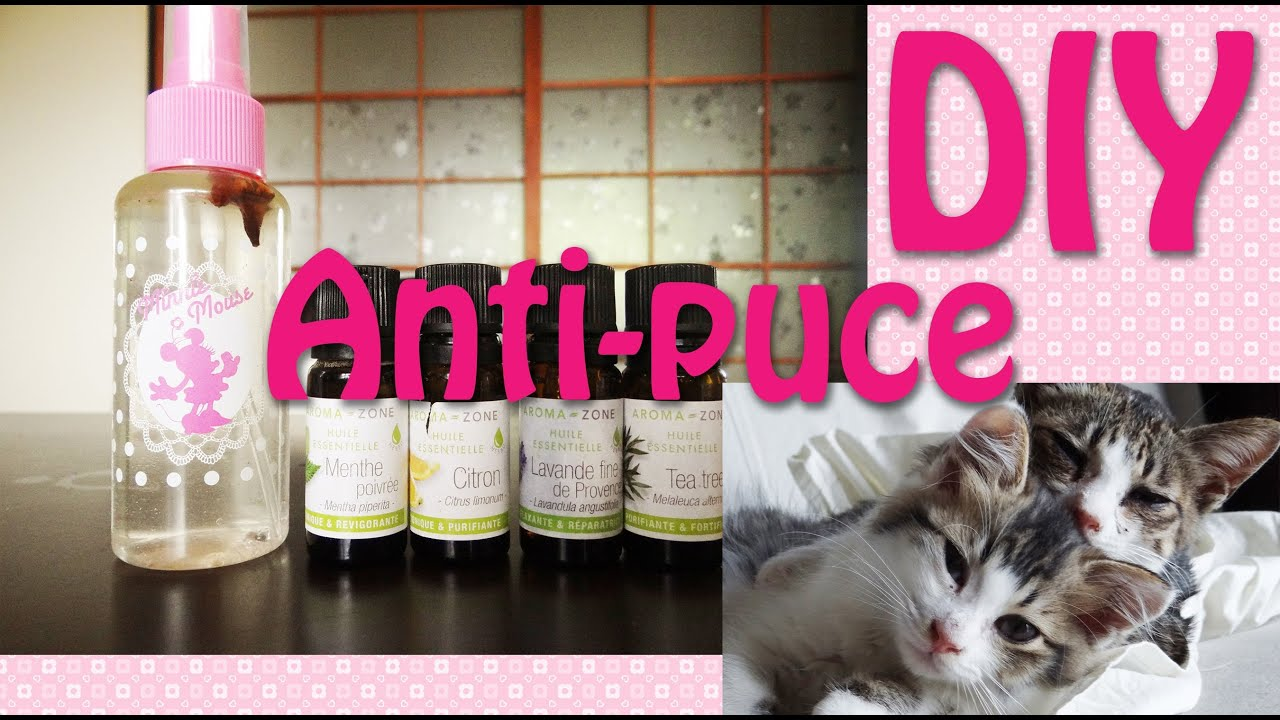diy anti puce fait maison youtube
