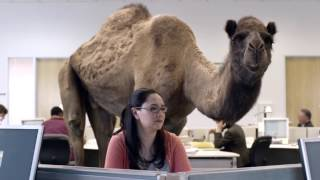 GEICO Hump Day Camel Commercial Happier Than A Camel On