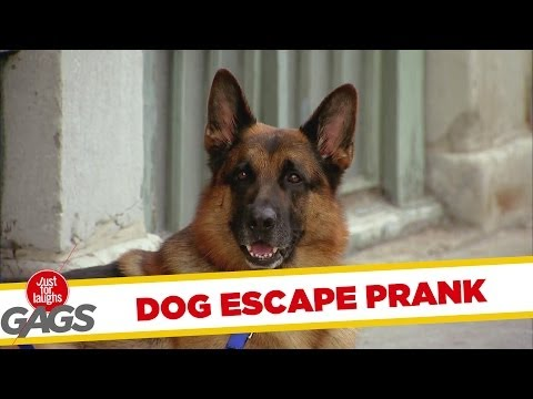 Dog Escape Gag