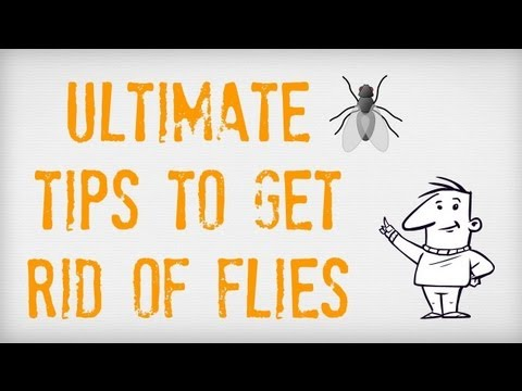 ultimate tips on how to get rid of flies getting rid of