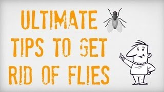 [Tips on How to Kill House Flies | Killing Flies Made Easy]