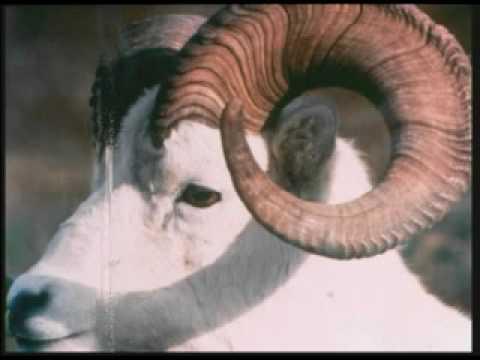 Fibonacci Sequence In Animals 11