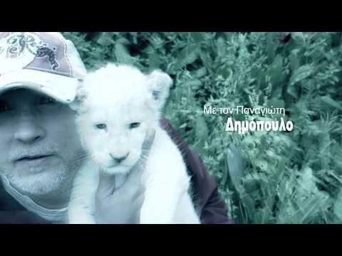 Σίμπα: Το σπάνιο λευκό λιοντάρι της Κύπρου