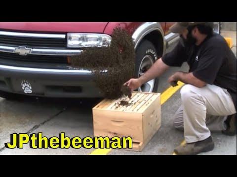 Huge Honey Bee Swarm On Dude's Vehicle