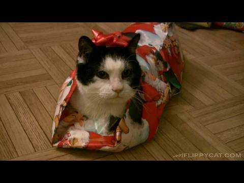 Youtube Gift Wrap Cat