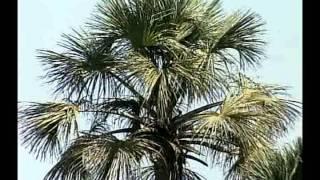 Fauna E Flora Documentário