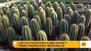 Propiedades de los cactus